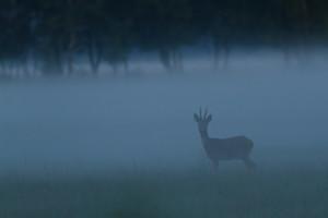 reebok-in-mist